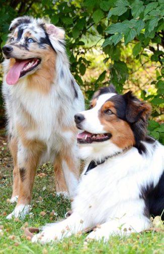 Smiley und Lia warten brav