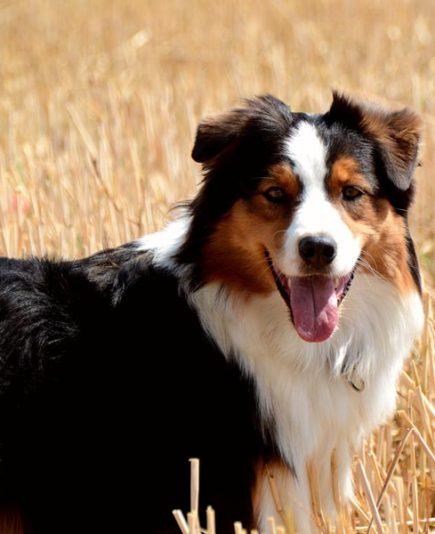 Therapiehund Smiley zeigt ihr berühmtes Lächeln