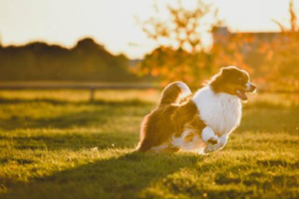 Hundepapa Momo