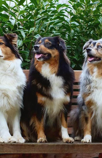 Ein tolles Aussie-Trio